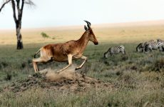 3 activités pour vivre une belle aventure en Afrique